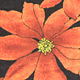 赤い花 スカート